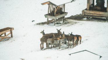 Habachtal, Bramberg, Nationalpark Hohe Tauern
