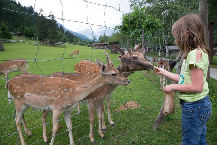 Sika- und Damwild lässt sich gern von den kleinen Rangern füttern.