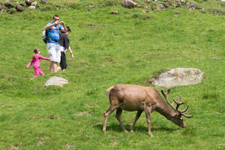 Wenn der Hirsch zum Fotomodel wird.