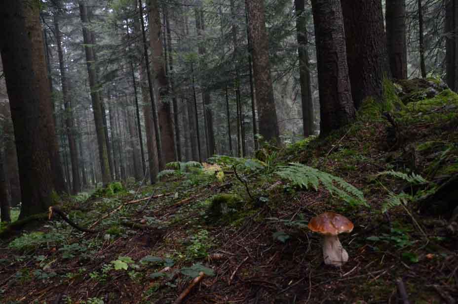 Ein Männlein im Walde