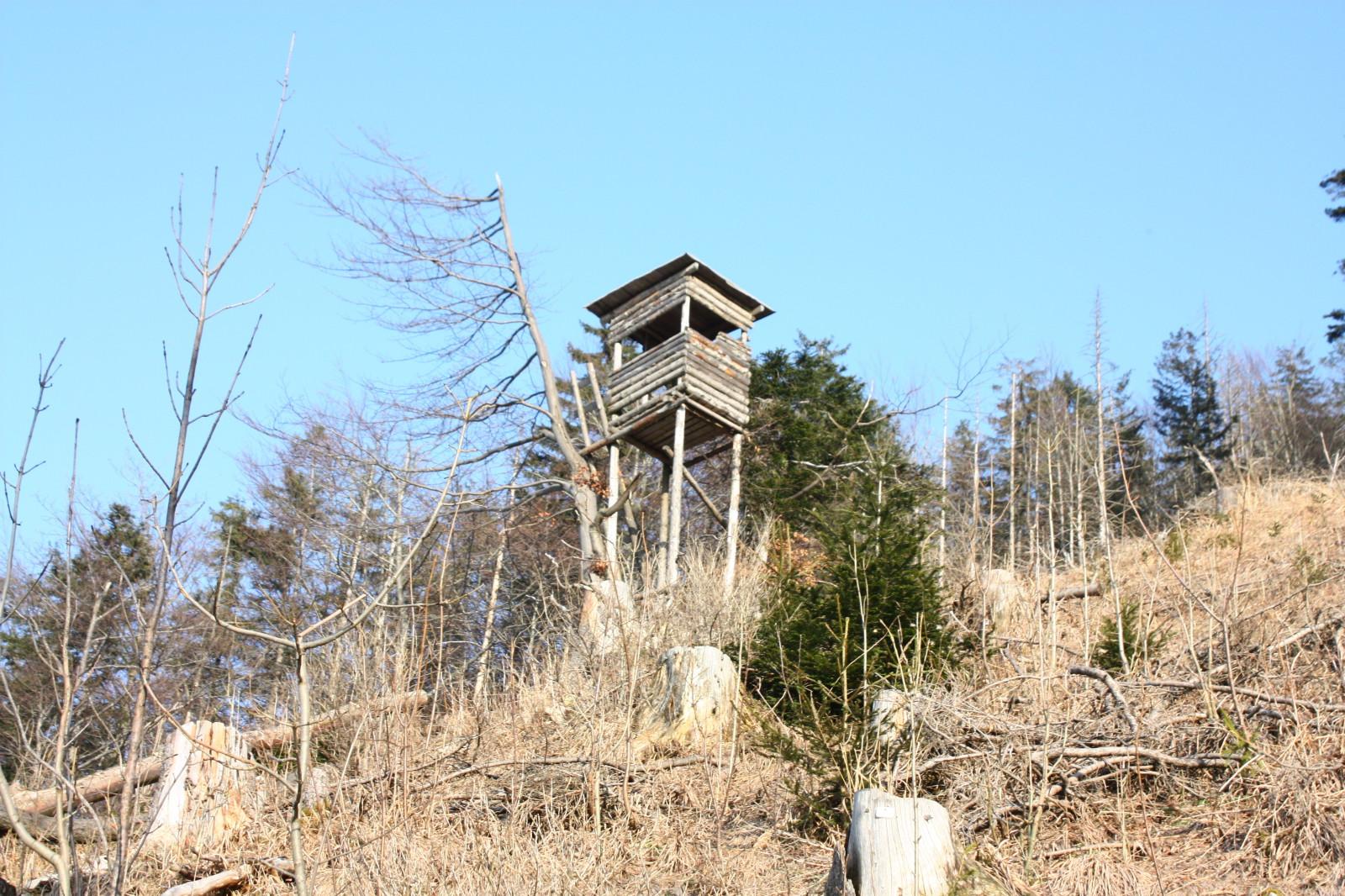 Typischer Wald-Anblick: Ein traditioneller Jagdsitz