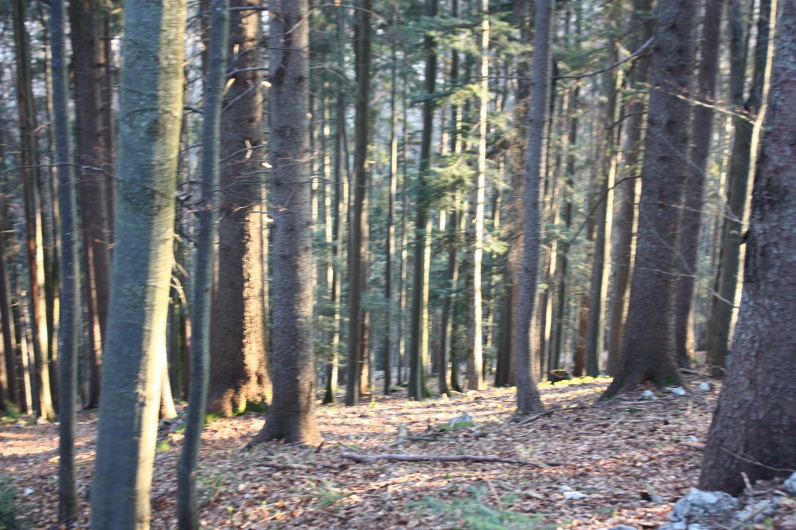 Immer wieder Wald...