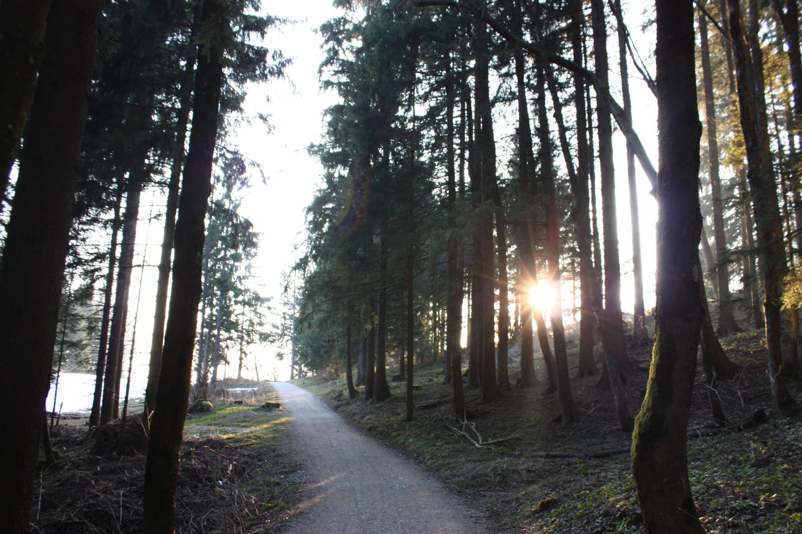 Sonne schimmert durch Bäume hindurch