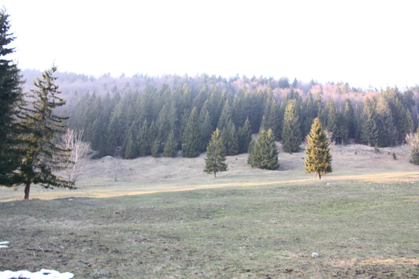 ...und Wälder