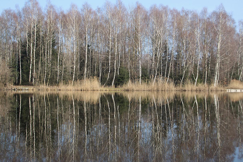 Der Bürmooser Moorsee: Im Sommer wird hier auch gebadet.