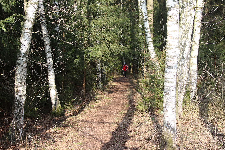Auch bei Sportlern beliebt: Der federnde Waldweg.