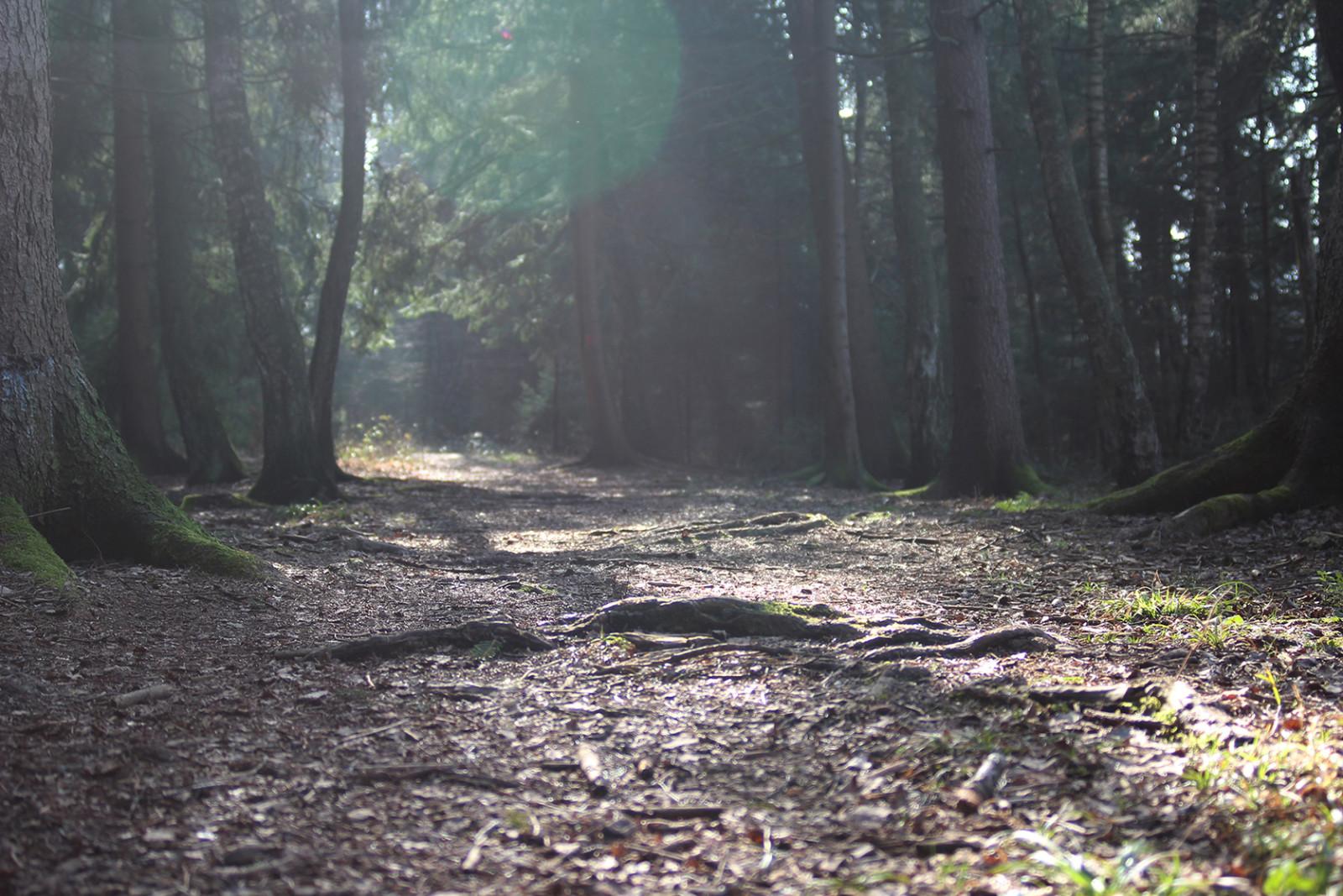 Mystisch: Die Stimmung entland des Wanderwegs.