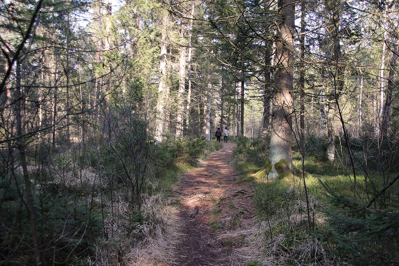 Erholsam: Ein Spaziergang durch den Mischwald.