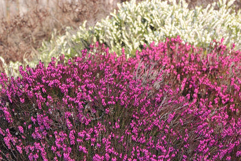 Blütenpracht bei der Schutzhütte Rodinger Moor.