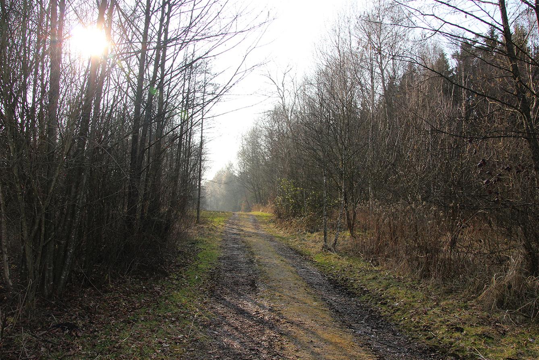 Abwechslungsreich: Vom Wald- auf den Wiesenweg.