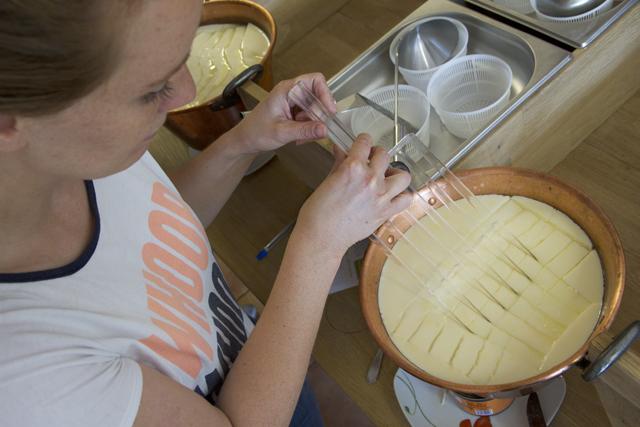 Nach ca. 30 Minuten warten wird die Milch geschnitten.