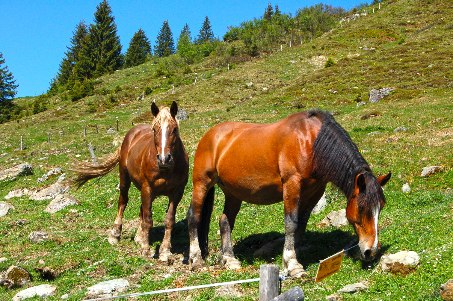 Pferde, Kühe, Schafe, man befindet sich mitten in der Natur.