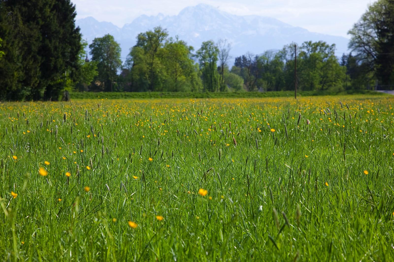Wildkräuter- und Blumenwiese