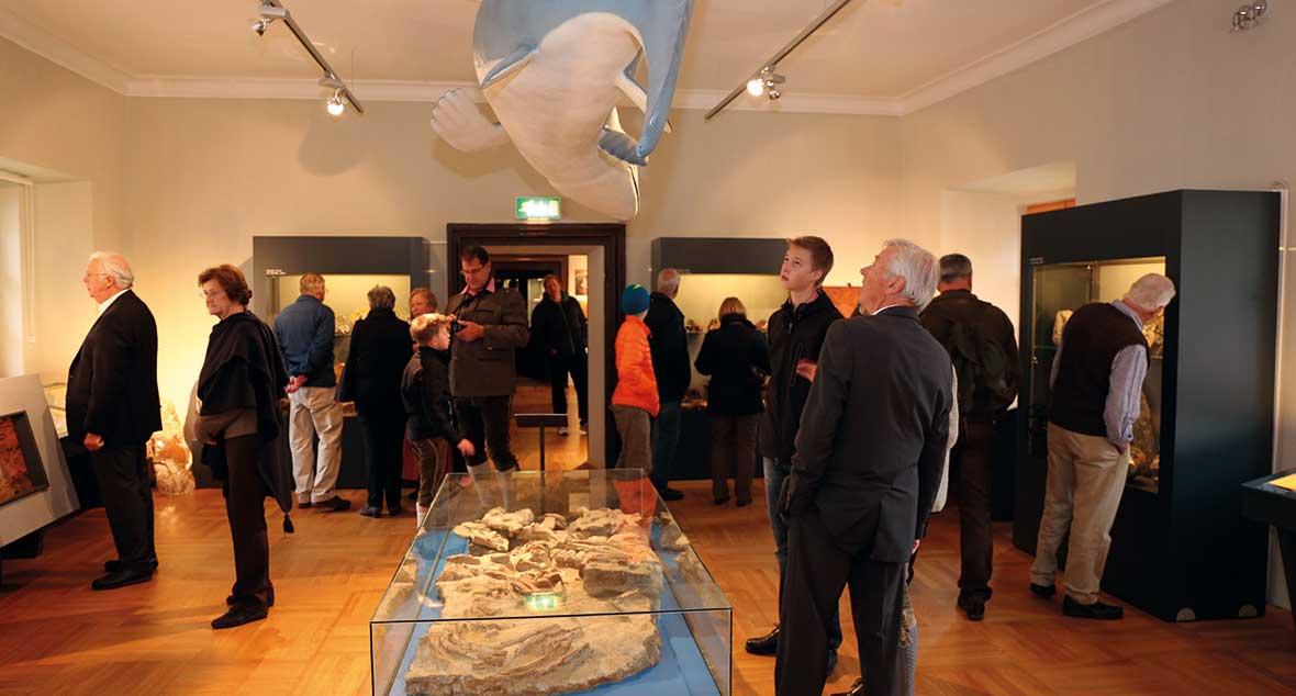 Fossilien-Ausstellung