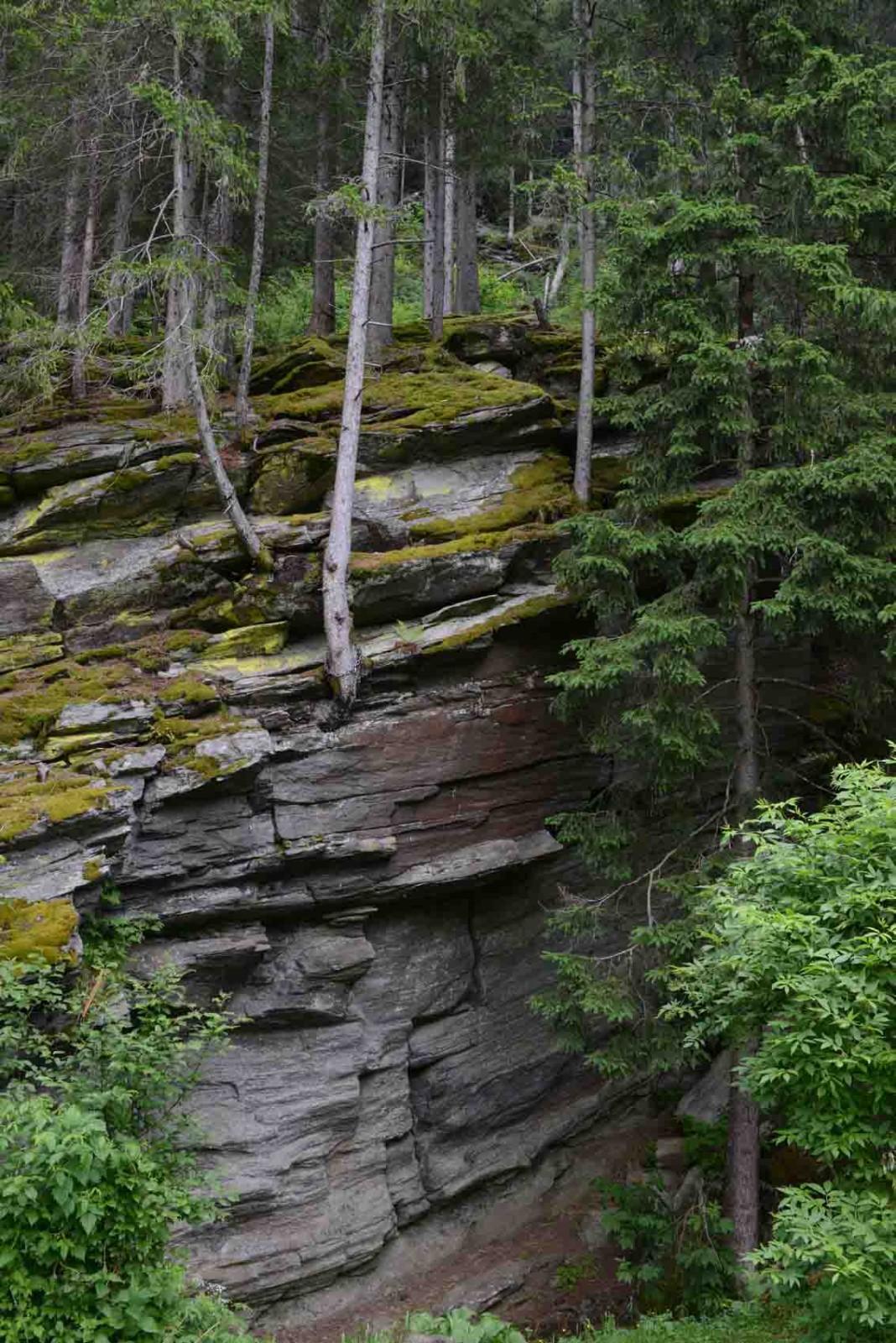 In Felsen wurzeln Bäume