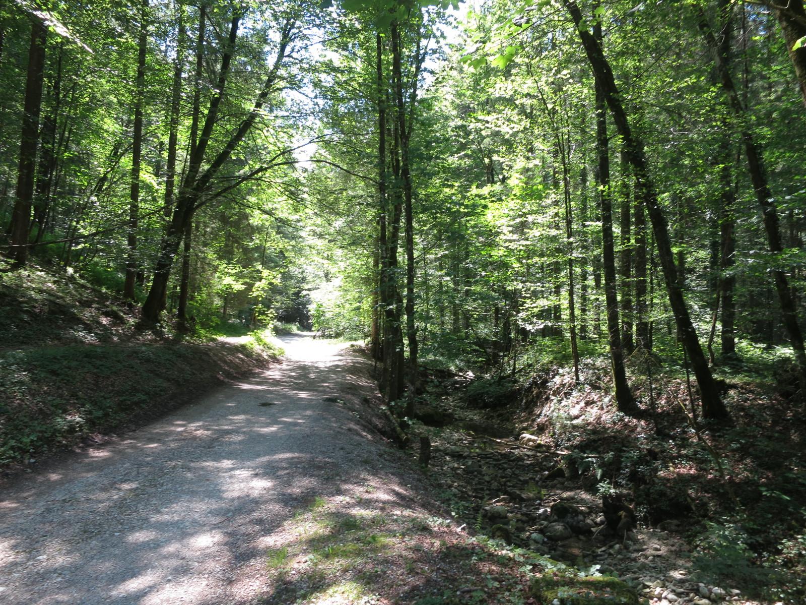Schattige Wege durch den Wald