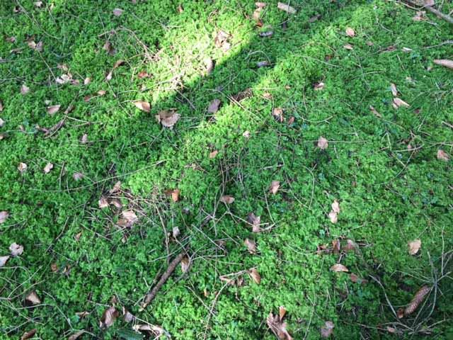 Moos bedeckt den Waldboden