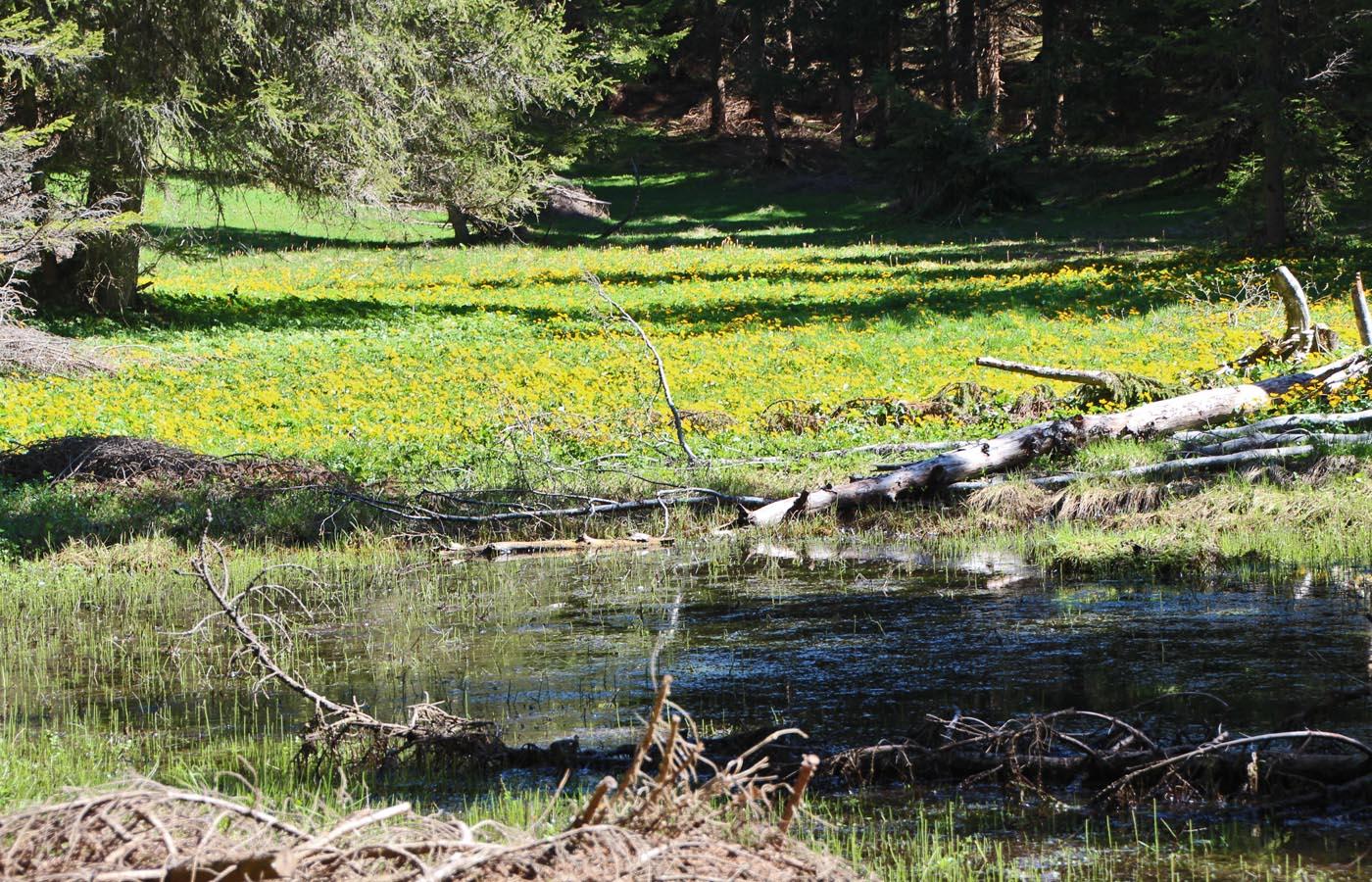 Nichts gedeiht ohne Wasser. Viele Pflanzen, wie Weide und Erle, finden sich auch direkt am Wasser