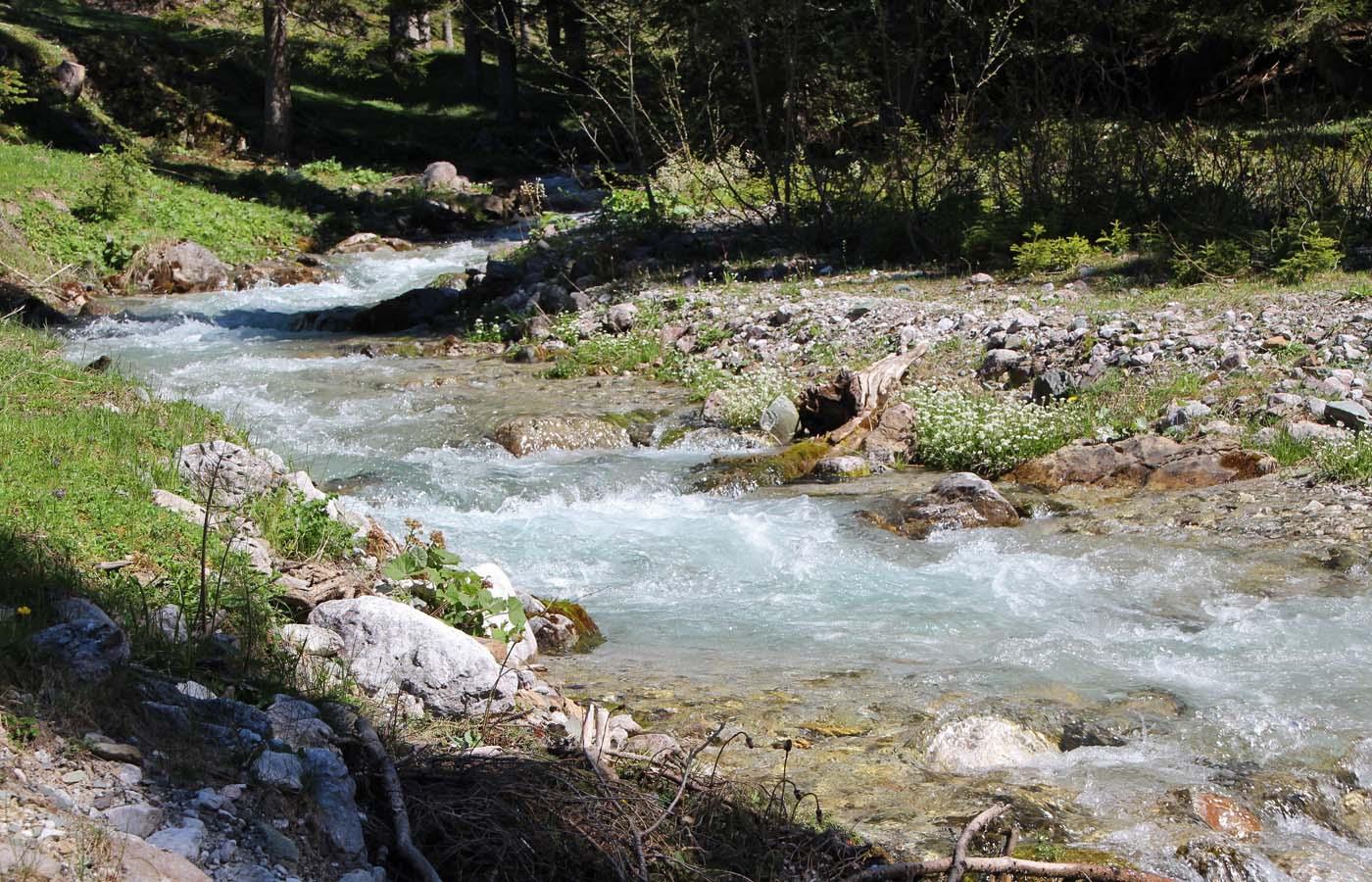 Leben trotz schwieriger Bedingungen am und im Gebirgsfluss