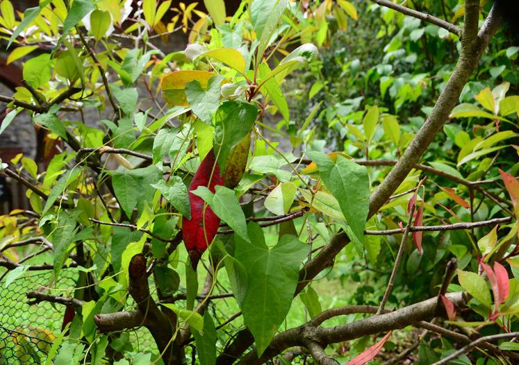 Rotes Blatt im Grün
