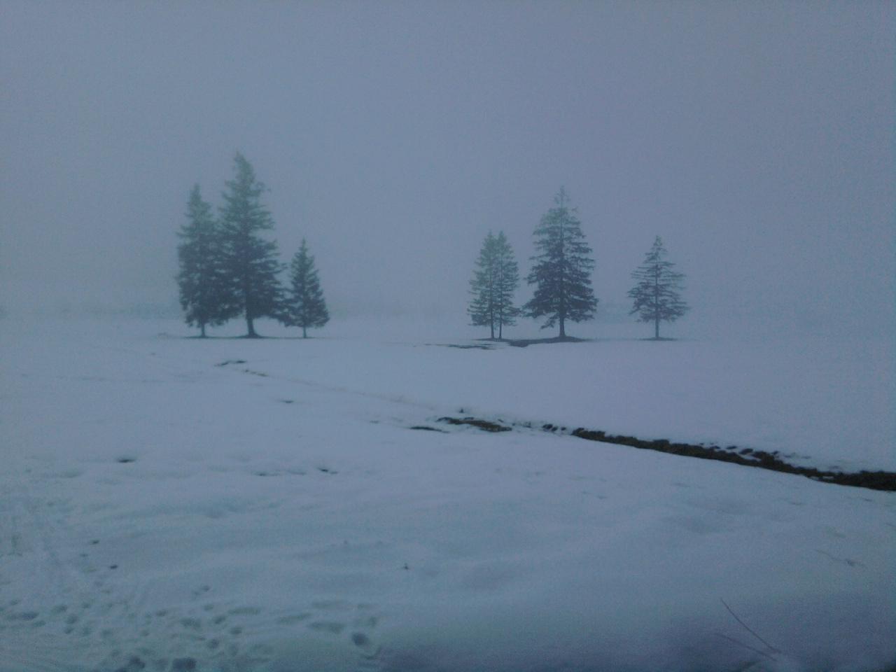 Schneesturm übern Moor