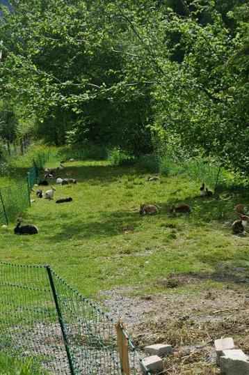 Kaninchen im Grün