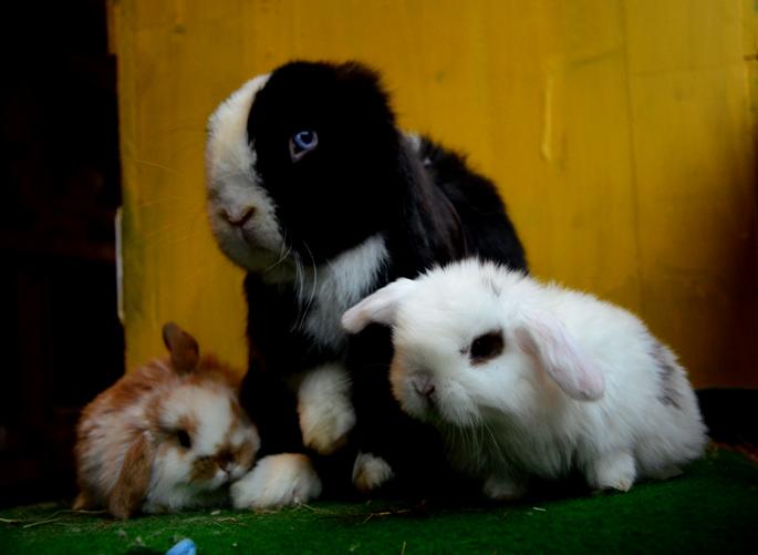 Kaninchen mit ihrer Mama
