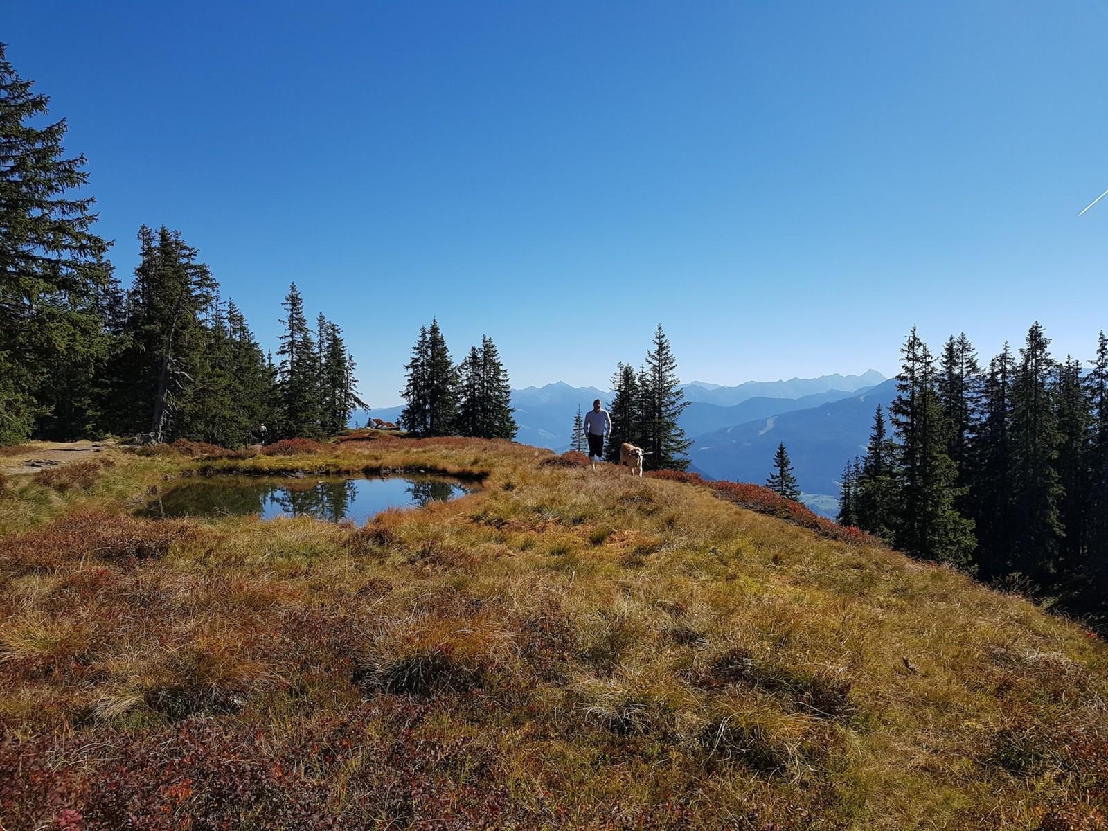 In den kleinen Seen spiegeln sich Bäume und Gipfel.