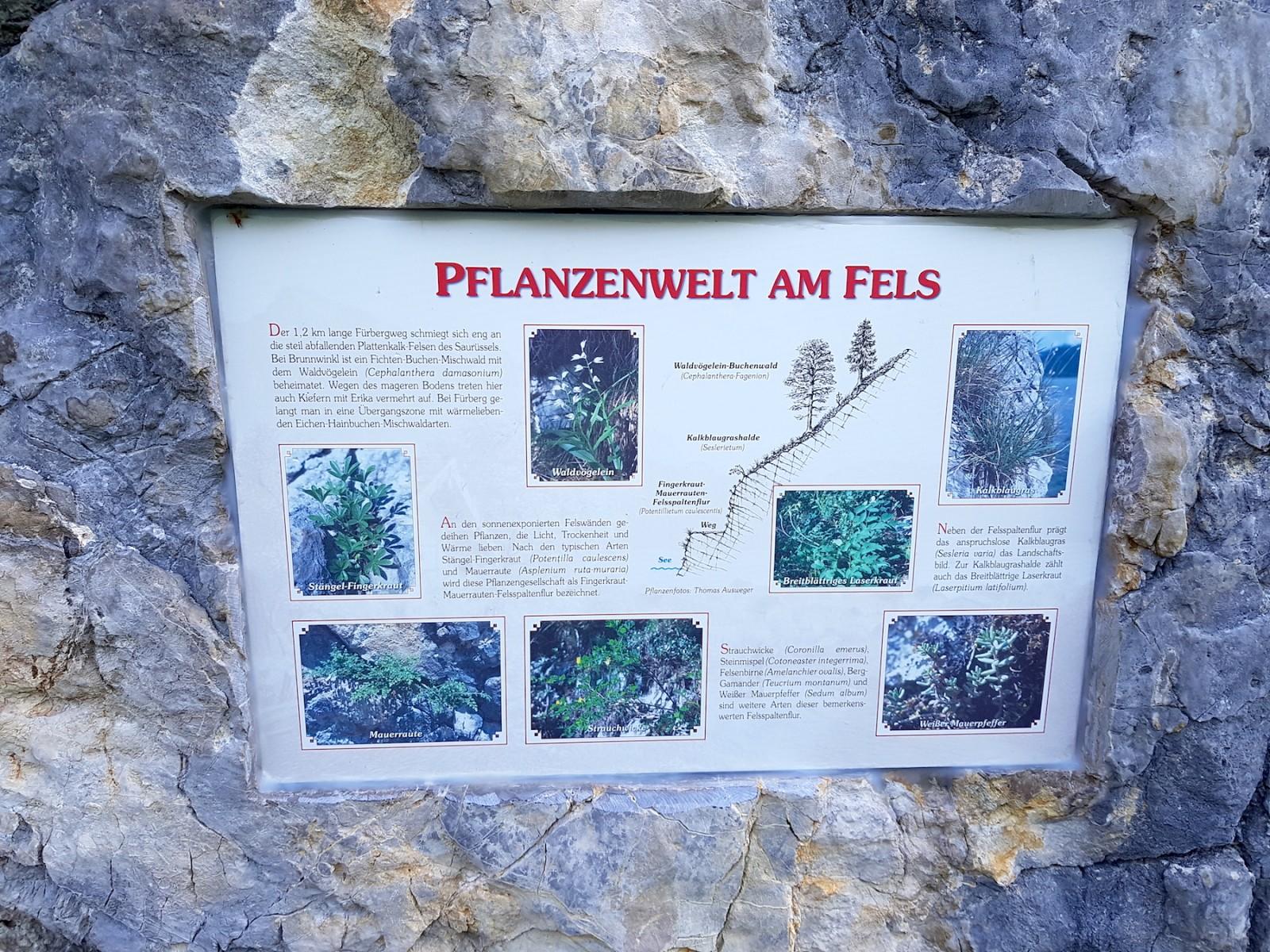 ...mit allerlei Wissenswertem über die heimische Pflanzenwelt...