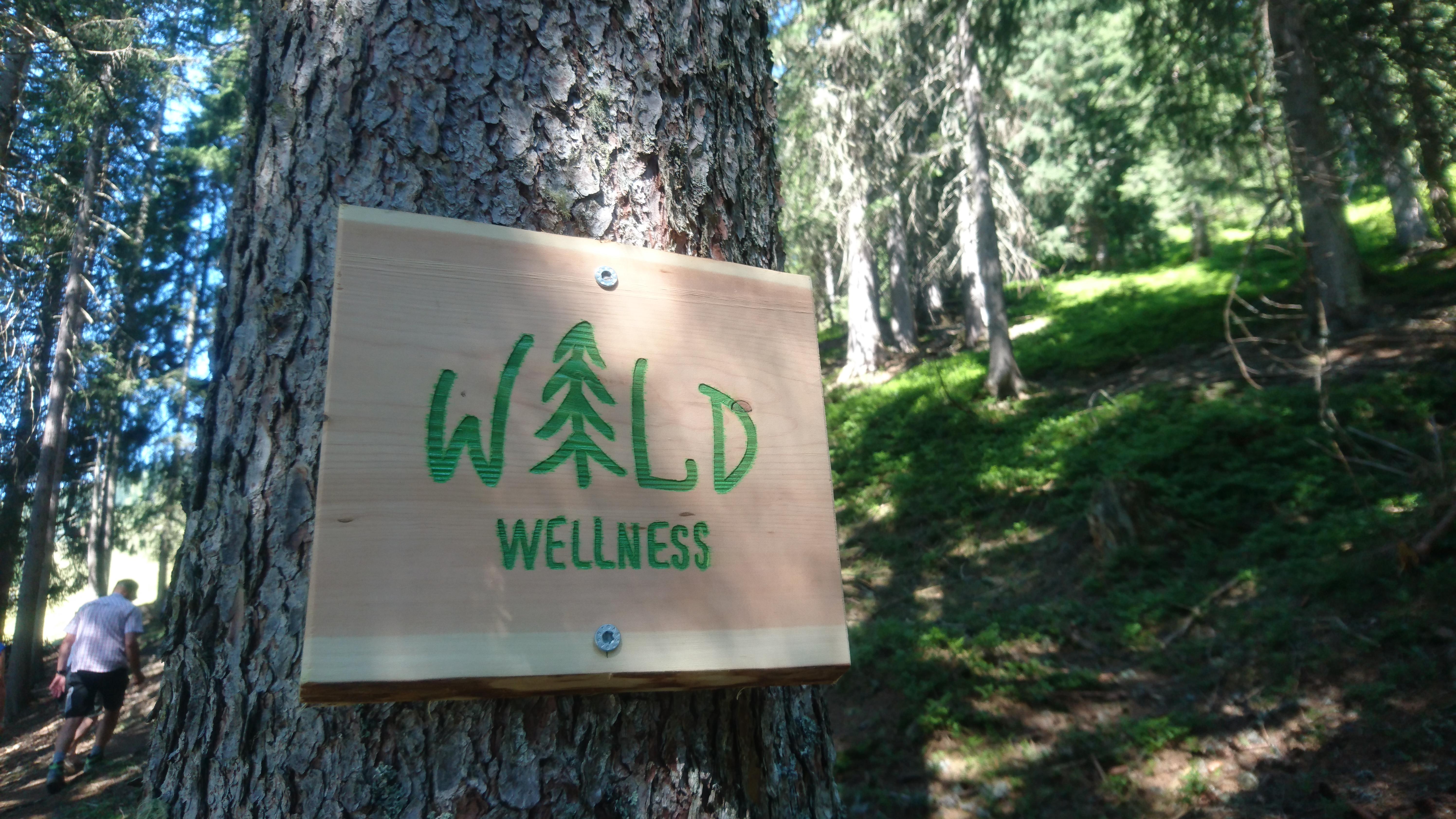 Entlang des Wald-Wellness-Wegs