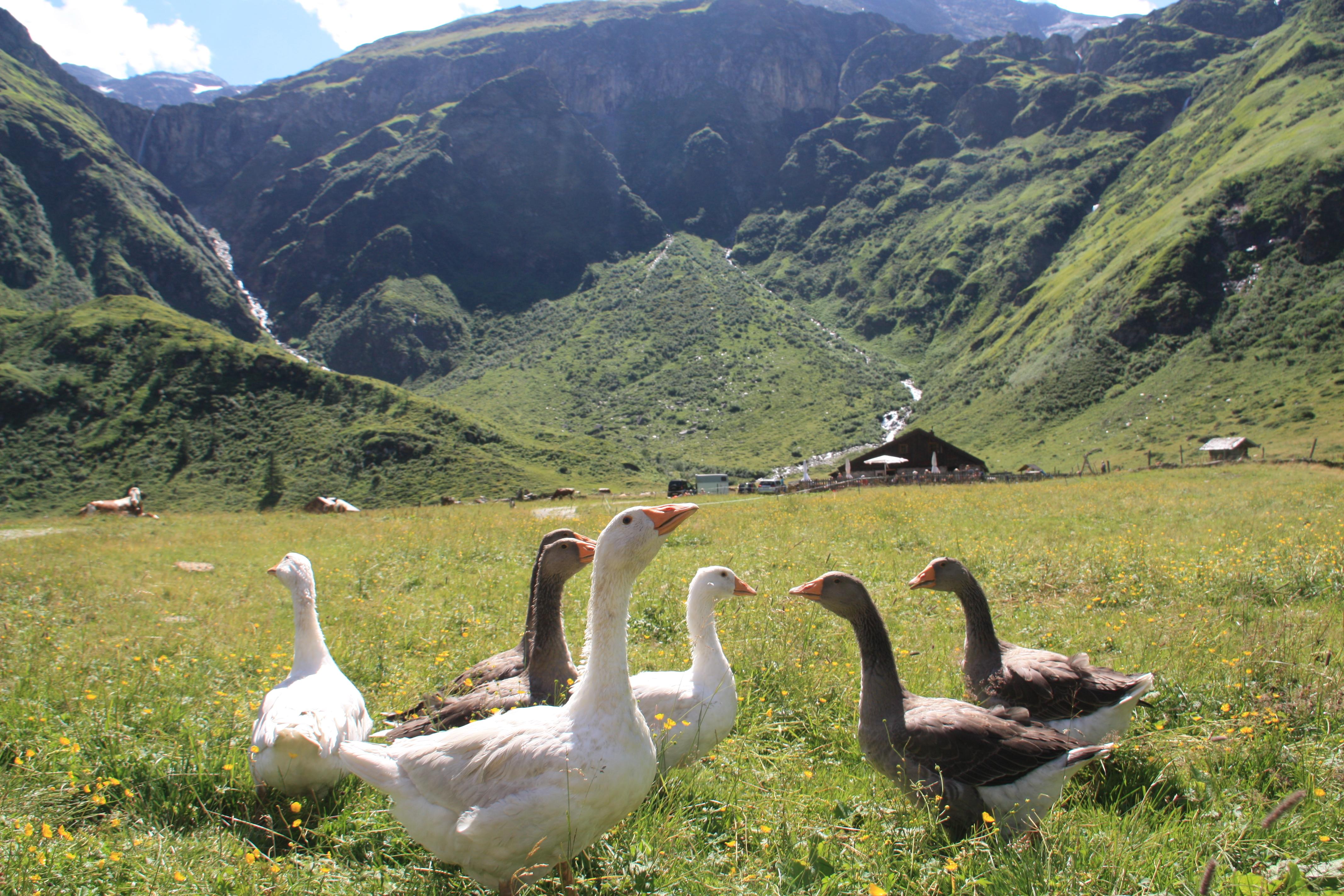 © SalzburgerLand Tourismus, Martina Egger, Wanderführer Hand Naglmayr kommt gerne auf einen Topfenstrudel vorbei