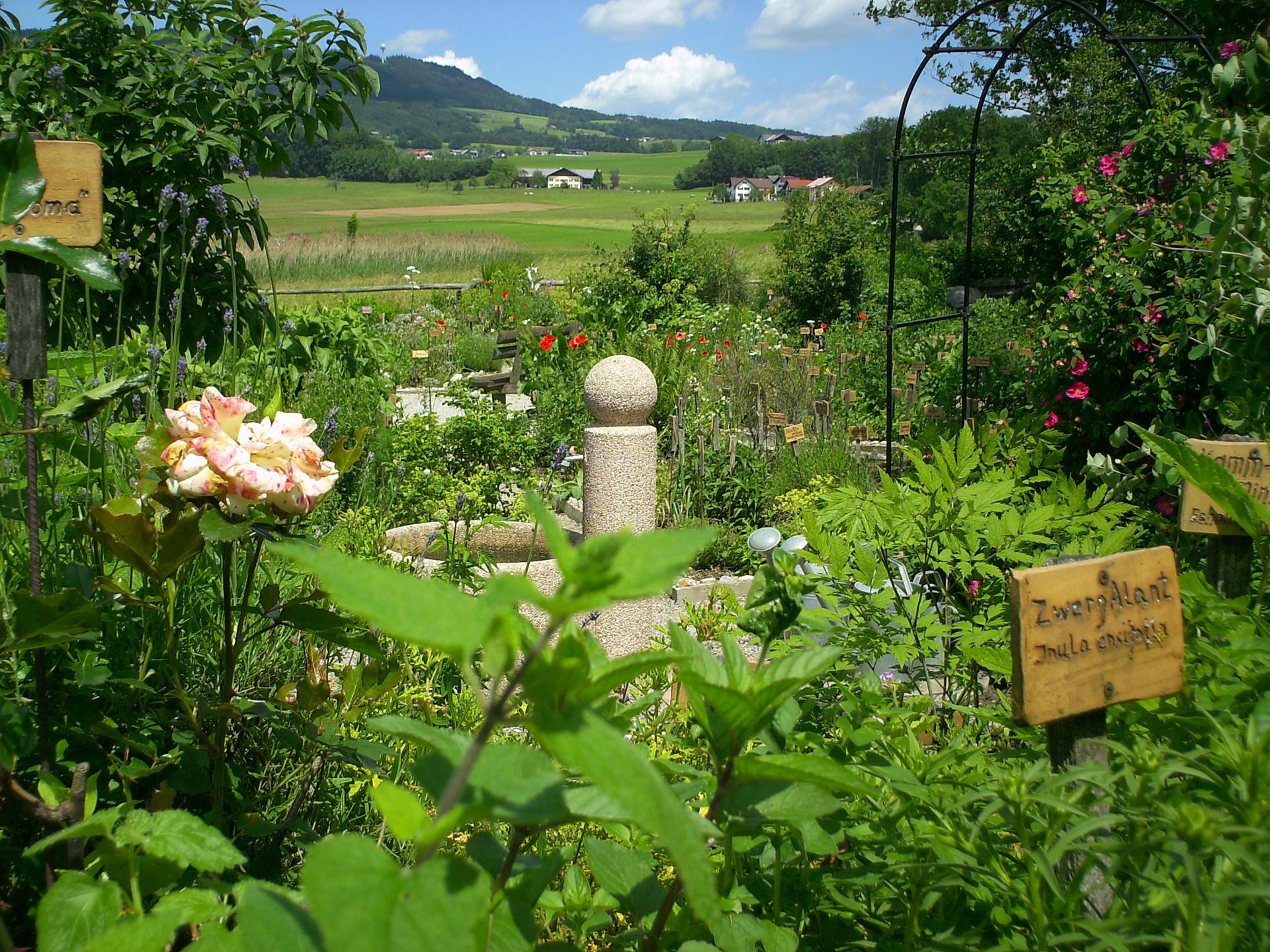 Grüner, blühender Kräutergarten