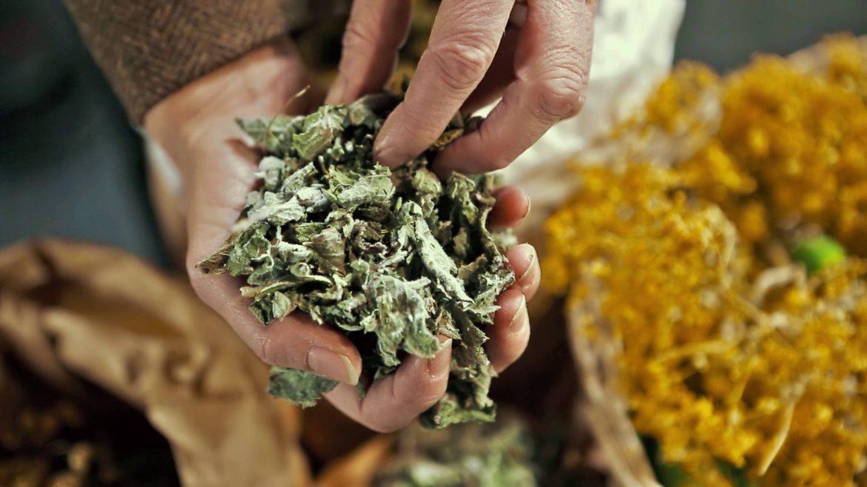 Getrocknete Kräuter werden von Hand zerbröselt
