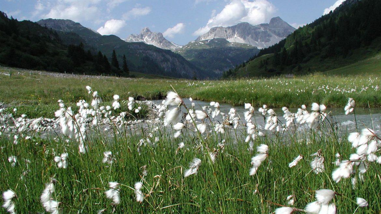 Naturpark Riedingtal - weißblühendes Gras im Vordergrund, im Hintergrund Berge und weiße Wolken