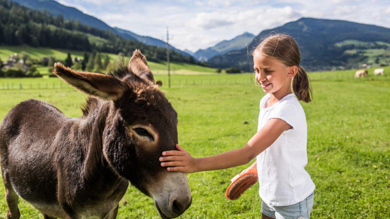 Mädel streichelt Esel auf Weide