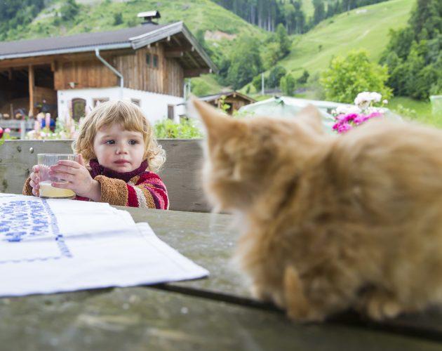 Katze sitzt auf einem Tisch bei einem kleinen Kind