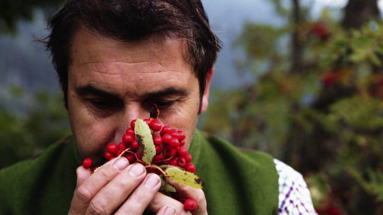Bauer riecht an Vogelbeeren