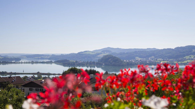 Rote Blumen, im Hintergerund Berge und die Trumer Seen