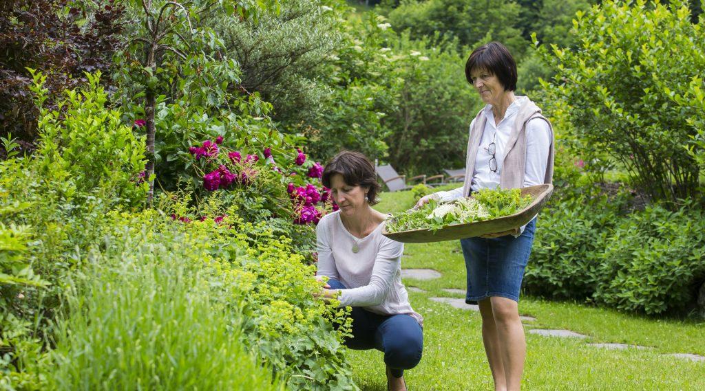 Zwei Frauen sammeln Kräuter im Garten