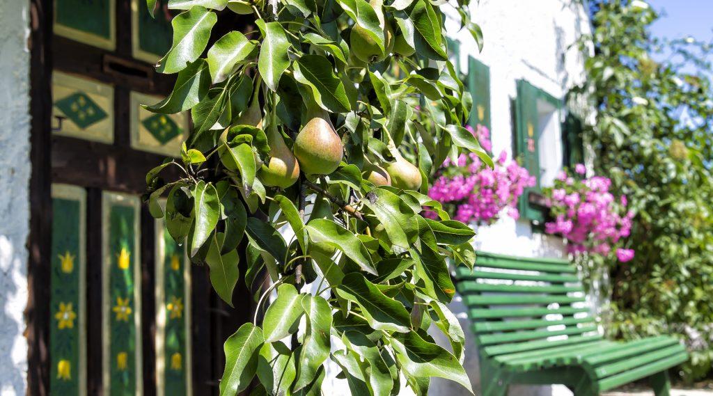 Grüne Gartenbank an der Hauswand - Birnbaum im Vordergrund