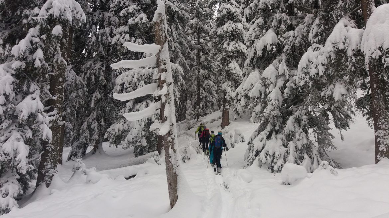 Raurisertal Skitour im Wald