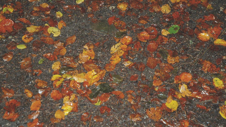 Feuchte, bunte Blätter liegen am Asphalt.