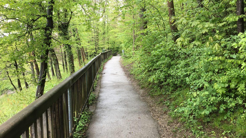Leicht-bergauf führender Weg durch den verregneten Wald.