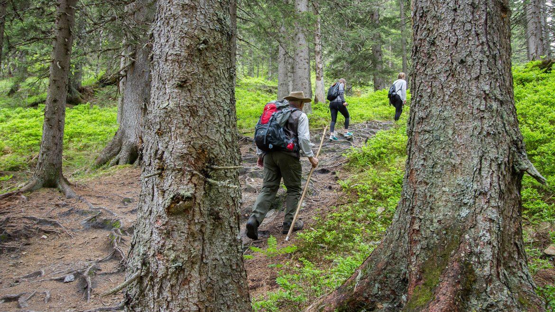 Unterwegs im Rauriser Urwald