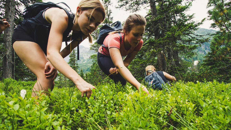 Stefanie, Julia und Angie auf der Suche nach Heidelbeeren