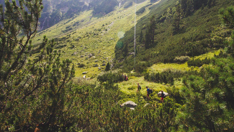 Wandern im Wiegenwald