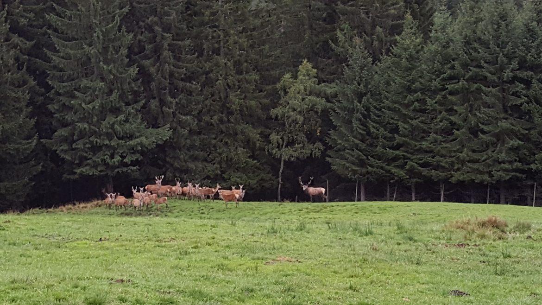 Wildtiere beim Alpengasthof Schlögelberger