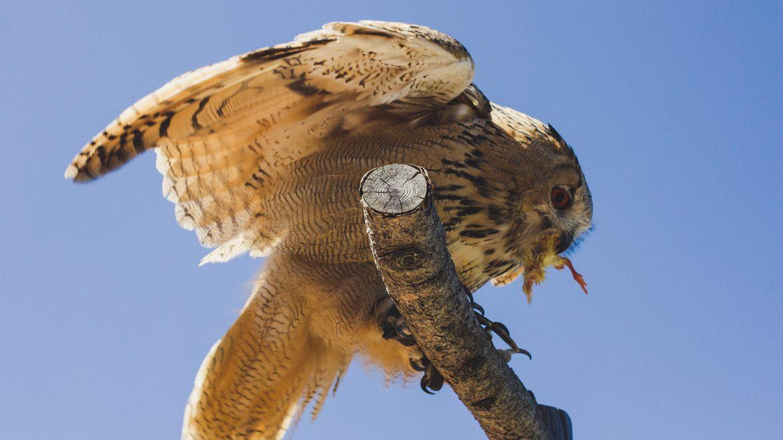 Greifvogelwarte Rauris