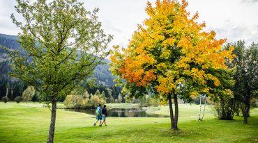 Pärchen spaziert durch herbstlichen Park, Laubbaum mit gelben Blättern