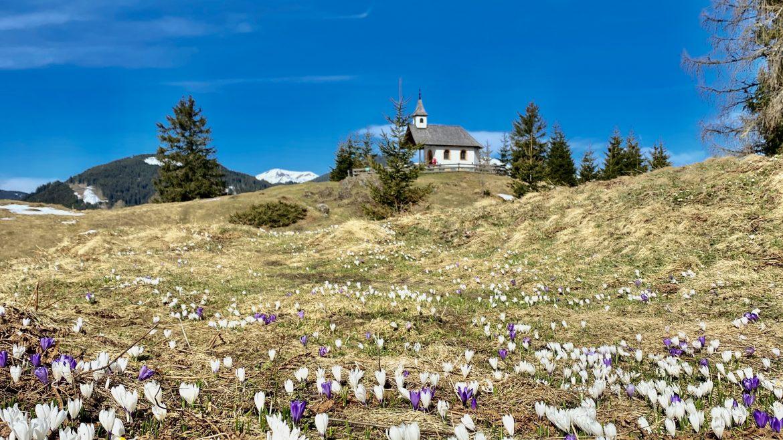 Hirtenkapelle Meiselstein in Goldeggweng